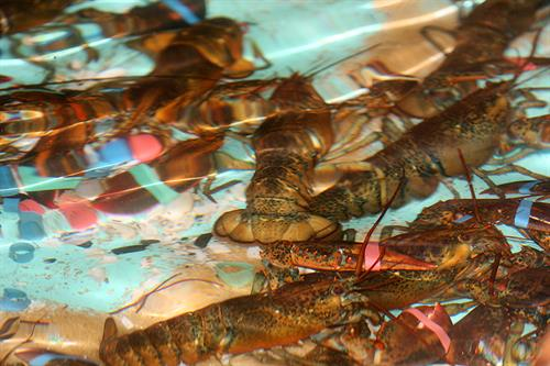 Come meet our lobsterin the seafood market!