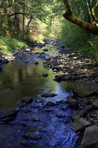 Year-round creek that changes constantly