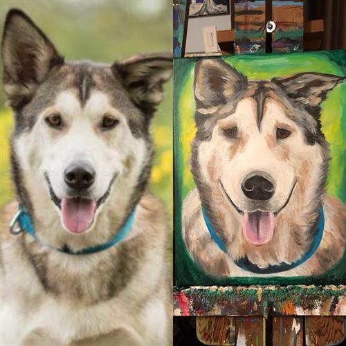 "Custom ""Husky"" pet portrait acrylic painting on canvas 12x18"""