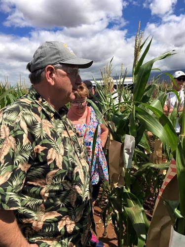 Corn Plot - New Genetics (Hawaii)