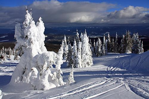 Whitefish Area - Snow Ghosts