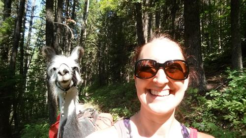 Llama trekking is a unique way to hike Northwest Montana and make new friends!