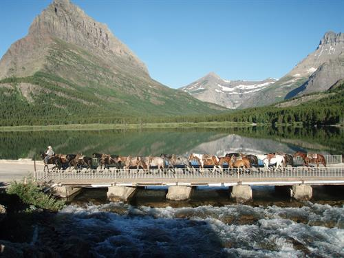 The Many Glacier area of the Park is known for big mountains and lots of wildlife. Book your Glacier trailride at the Crown of the Continent Discovery Center