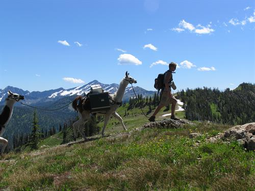 A llama trek is a great way to get out and see the stunning beauty of Northwest Montana