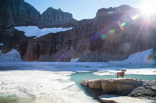 Bighorn Sheep at Grinnell Glacier.