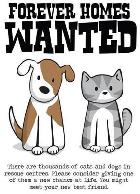 Pet Adoption Quotes - Goldenacresdogs.com