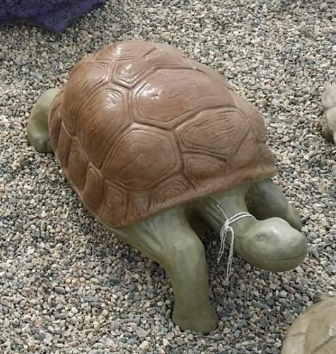 Gallery Image tortoise.jpg