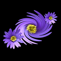 "Photo-Art, created from a ""windflower""."