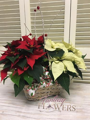 Poinsettias and green plants perfect for thank you gifts and expression of sympathy