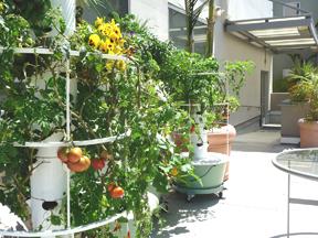 Rooftop Garden-1