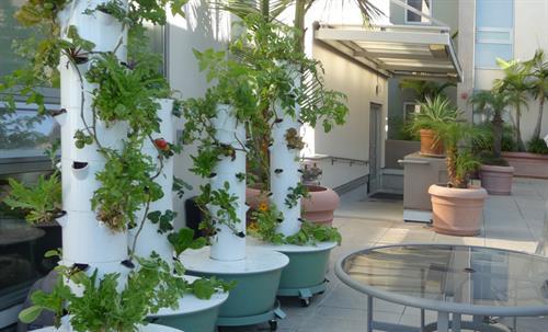 Rooftop Garden-2