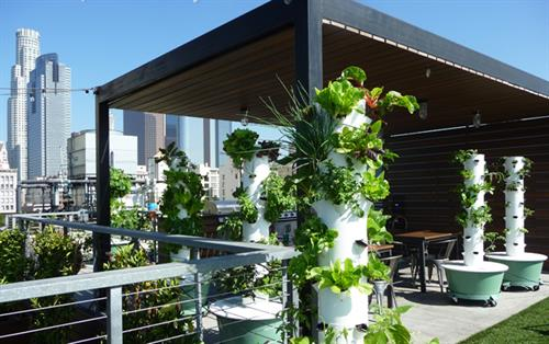 Rooftop Mini-Farm