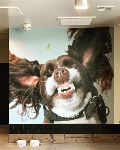 Gallery Image Pet_spa.png
