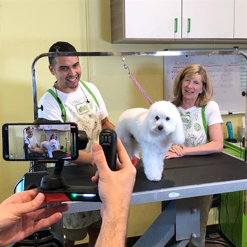 Behind the scenes at Paws N Effect Pet Spa in Santa Monica.