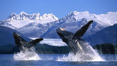 The Wonder of Alaska