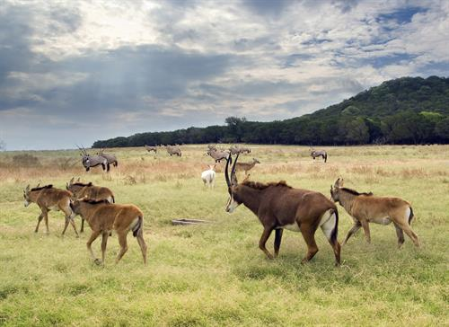Fossil rim wildlife center discount coupons