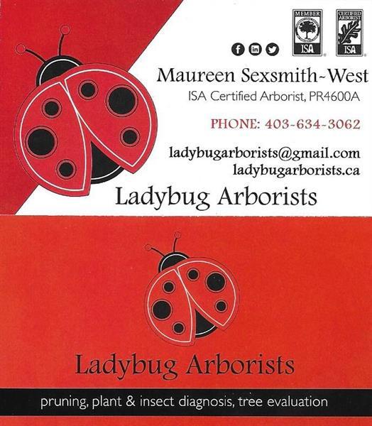 LADYBUG ARBORISTS