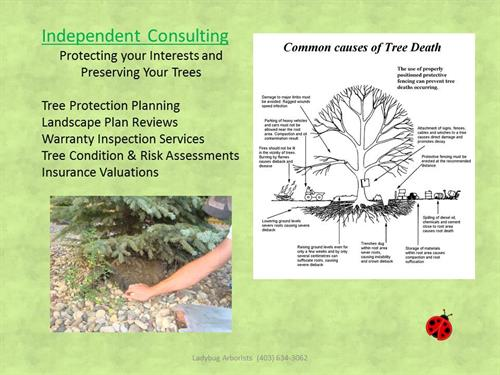 Construction is the leading cause of tree mortality - Let us assess your trees before your project begins.