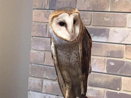 Gallery Image owl.jpg