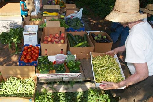 Common Good Gardens plants, grows and harvests produce and collected and delivered produce from supporting farm stands donations.