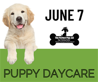 News Release: The Perfect Pup now offering Puppy Play and Train Day Camp and Puppy Daycare!