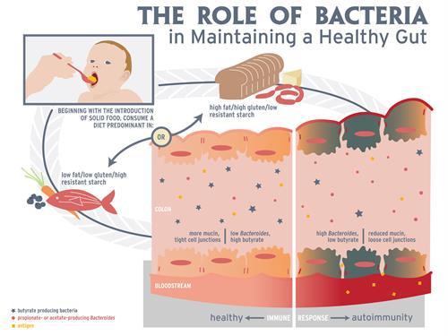 Gallery Image diabetes-microbes-TITLE.jpg