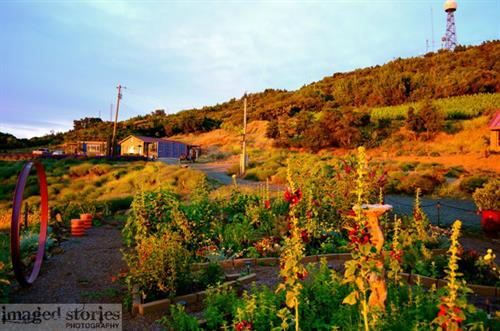 Garden at sunrise