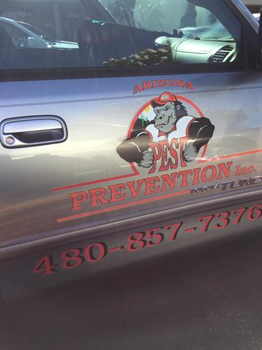 Vehicle Branding - Print & Cut Graphics