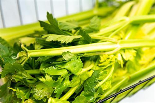 Gallery Image celery.jpg