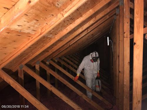 One of our technicians remediating mold in an attic.