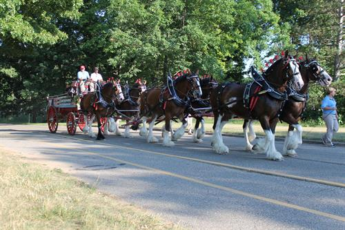 Clydesdales at Metropark special events