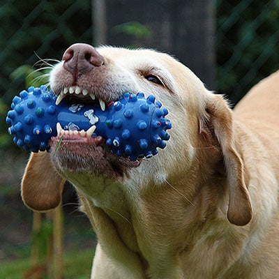 Gallery Image Palmetto_12pets-dog-toy-in-mouth-featured.jpg