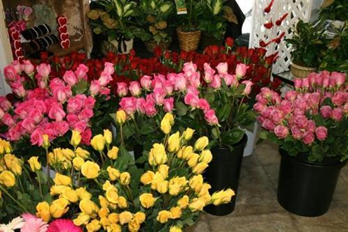 Gallery Image roses%20roses.jpg