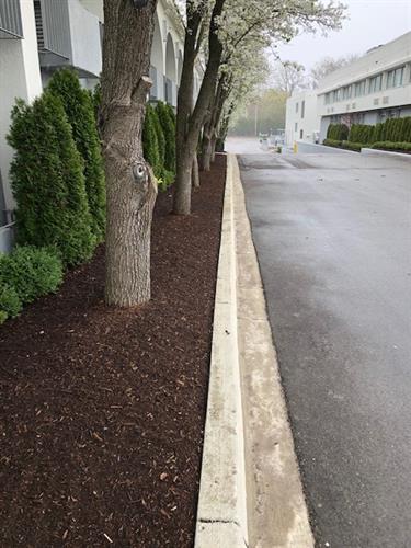 Double Tree Bloomfield side mulch