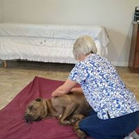 Canine Massage & Acupressure