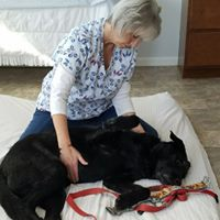 Canine Massage & Energy Sweep