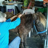 Equine Massage