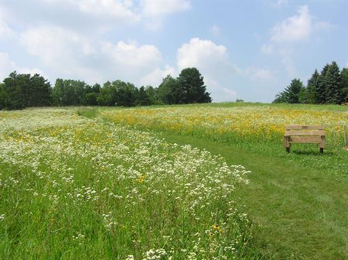 130 acres of restored prairie and woodland to walk and explore