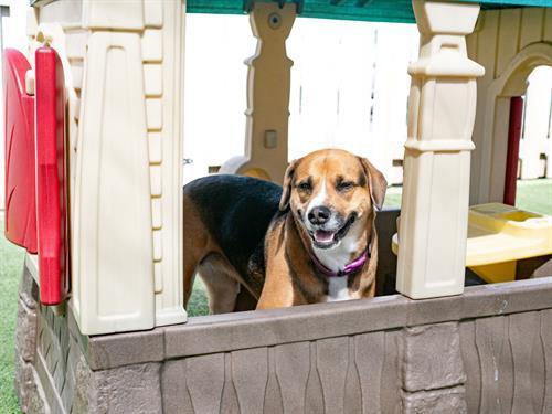 Gallery Image dogtopiamadisonwest-10.jpg