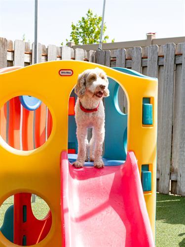Gallery Image dogtopiamadisonwest-18.jpg