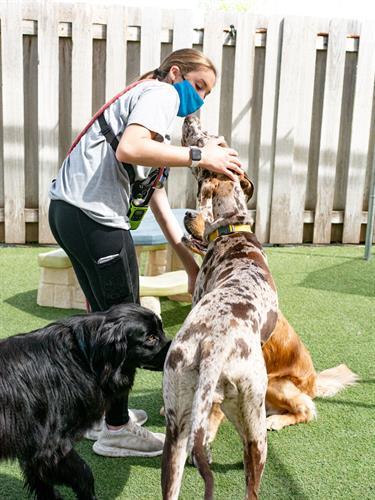 Gallery Image dogtopiamadisonwest-19.jpg
