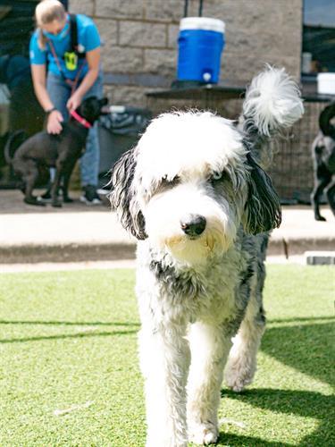 Gallery Image dogtopiamadisonwest-8.jpg