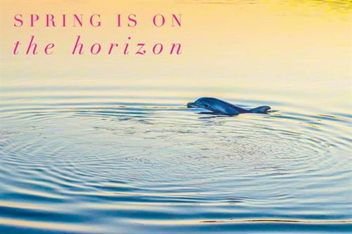 Gallery Image dolphin.jpg