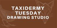 Taxidermy Tuesday Drawing Studio