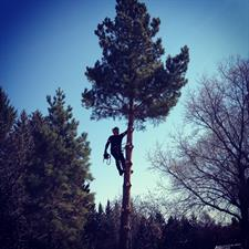 Bee EZ Tree Service