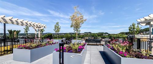 7th Floor Terrace Gardens
