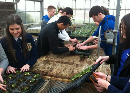 CCHS students working in the greenhouse.