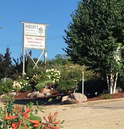 A beautiful summer morning at Knecht's Nurseries & Landscaping!
