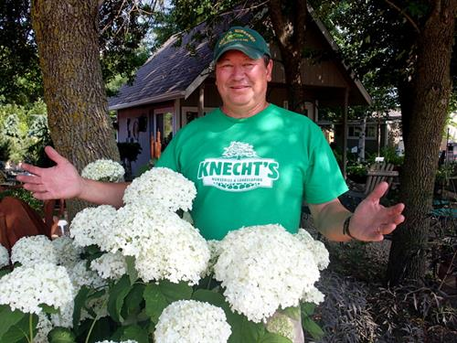 Leif Knecht pictured with Incrediball® Hydrangea