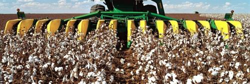 Gallery Image buy_raw_cotton_online_-_cotton_harvesting.jpg